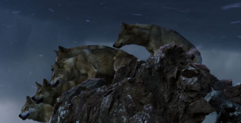 Picture Wolf Totem