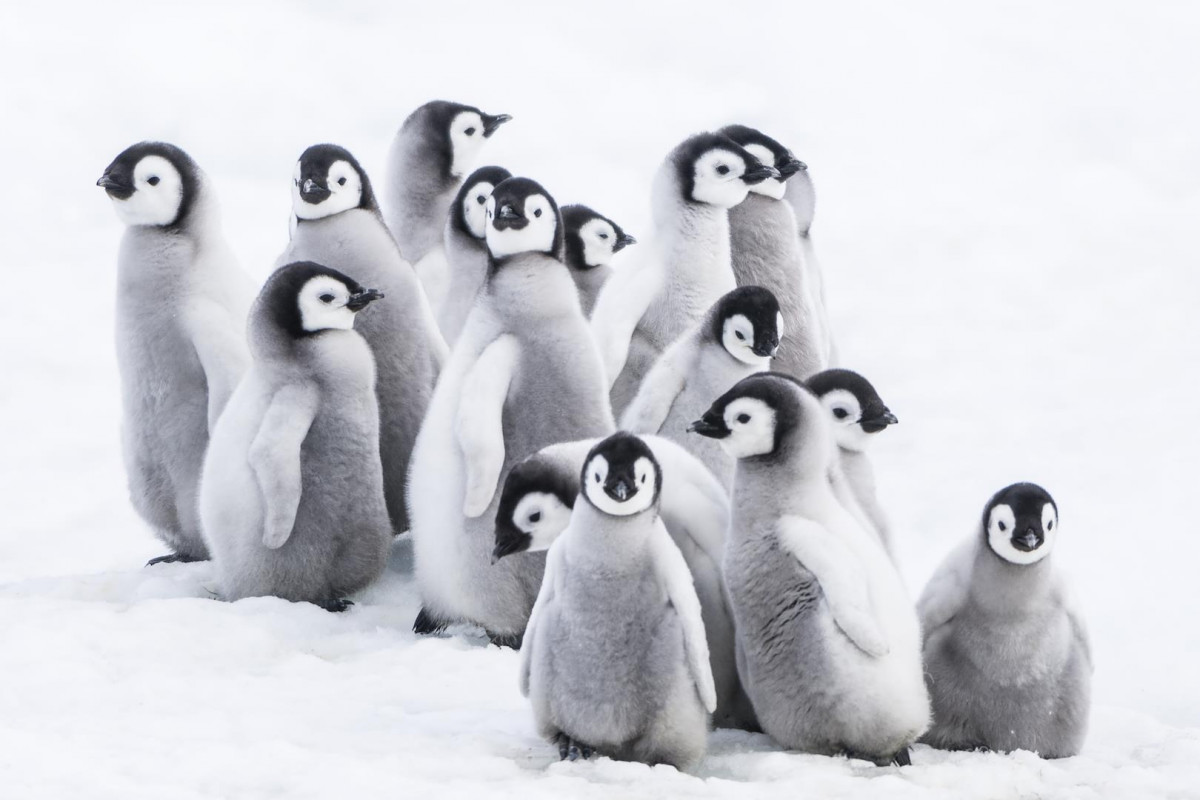 Picture March of the Penguins 2: The Call