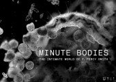 Minute Bodies: The Intimate World of F. Percy Smith photo